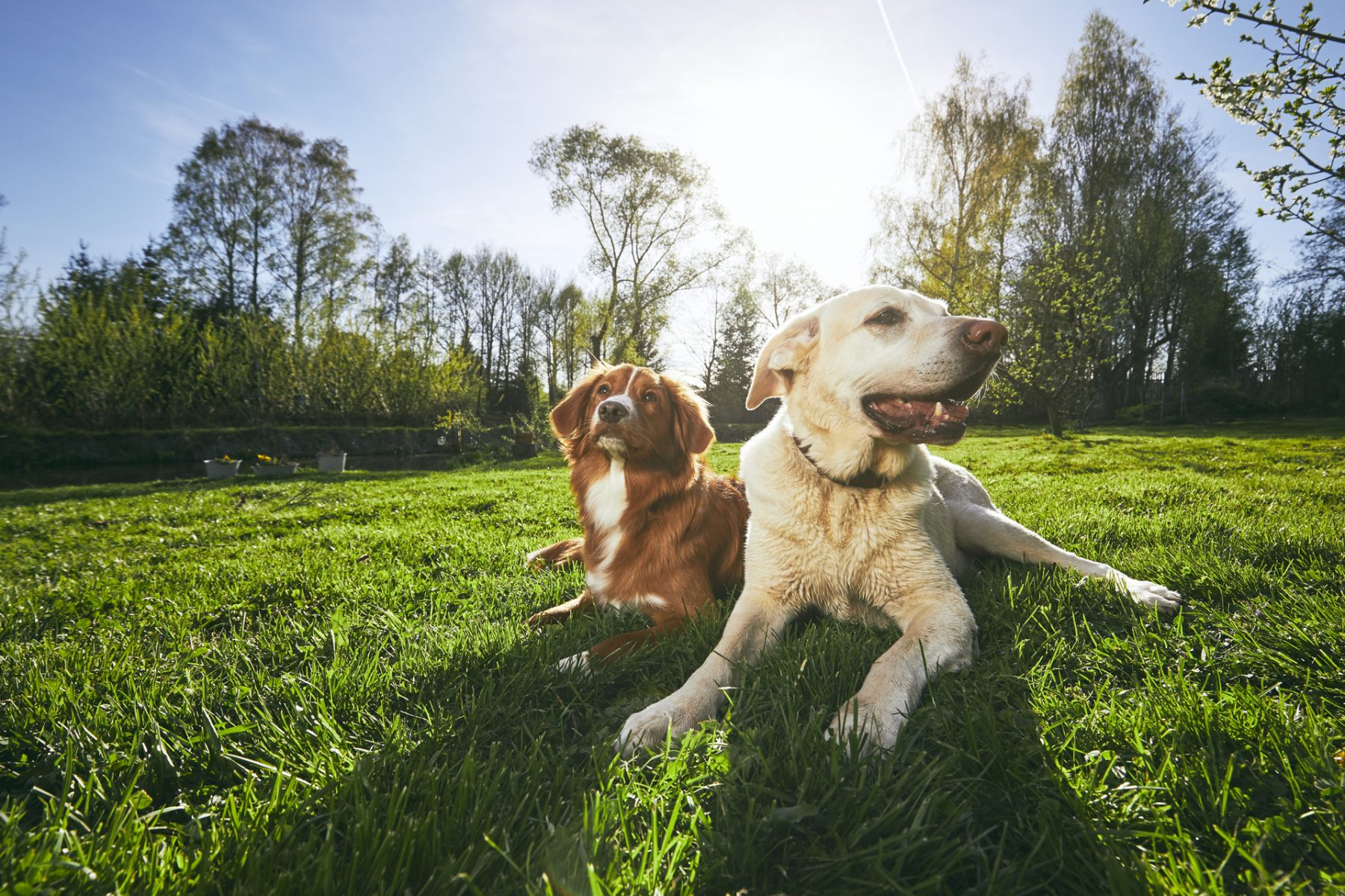 Best cbd oil for dogs - Rooted Hemp Co